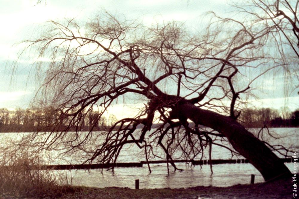 arbre_lac_tegel